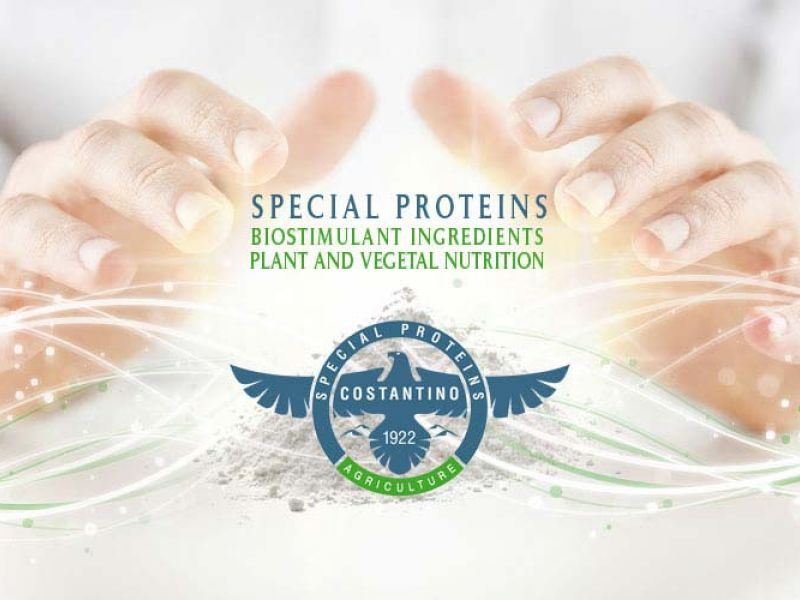 Plant and vegetal nutrition
